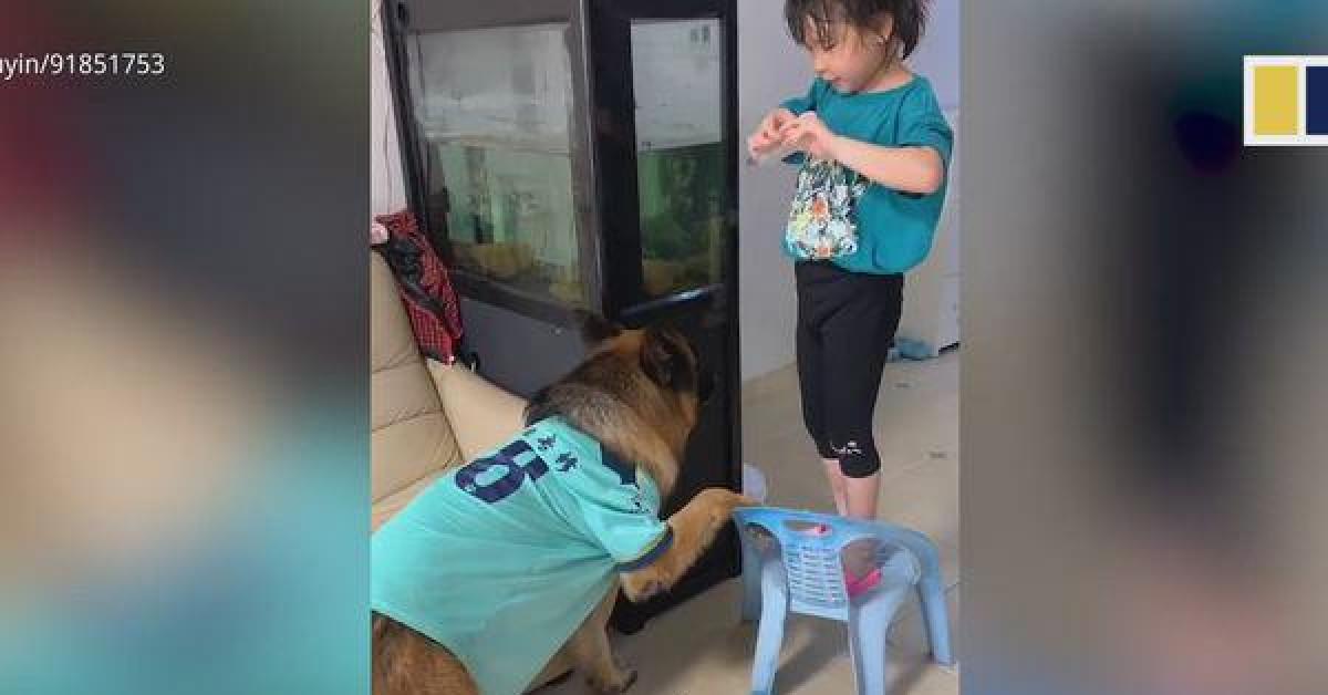 """Màn hợp tác trộm đồ """"siêu dễ thương"""" giữa cô chủ nhỏ và chú chó - 1"""