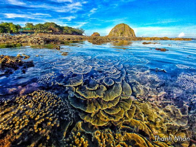 Tới Phú Yên ngắm rạn san hô trên cạn rực rỡ sắc màu - 1