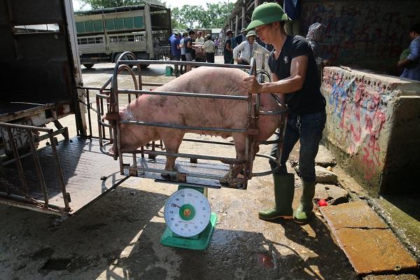 Lợn Thái Lan đổ bộ, giá lợn hơi bất ngờ giảm: Bà nội trợ chớ vội mừng! - 1
