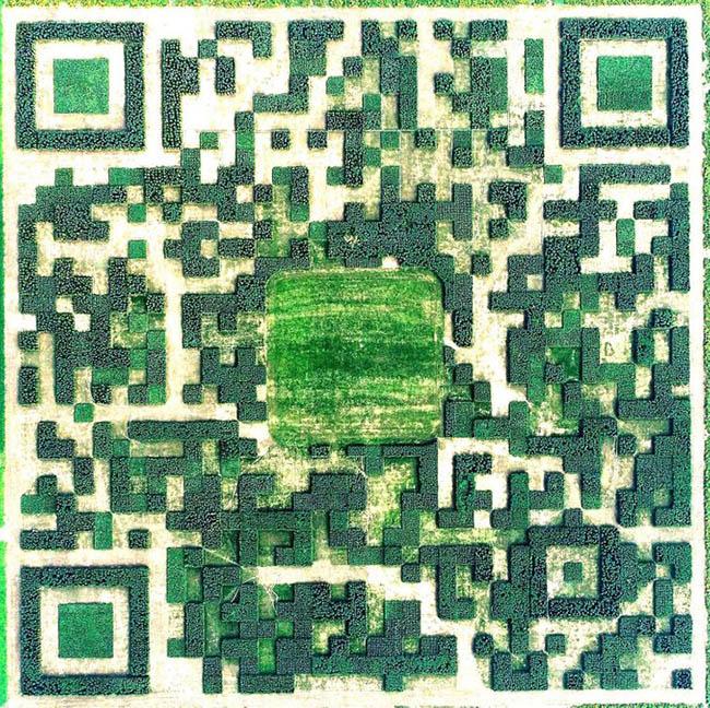 Khu vườn mã QR khổng lồ ở Trung Quốc: Mã QR khổng lồ này được làm từ 130.000 cây chỉ có thể được quét từ trên trời. Trong trường hợp tò mò, bạn chỉ có thể quét nó với sự trợ giúp của ứng dụng có tên WeChat.