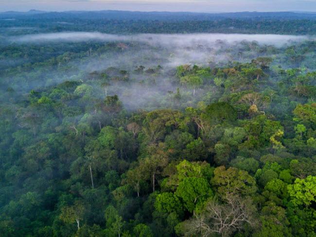 Rừng Amazon: Năm trên lãnh thổ của các quốc gia Brazil, Ecuador, Peru, Bolivia, Colombia, Venezuela, Guyana và Suriname, Amazon là rừng nhiệt đới lớn nhất thế giới chiếm khoảng 50% diện tích rừng nhiệt đới còn lại trên Trái đất. Khoảng 1/10 sinh vật mới được tìm thấy ở đây.
