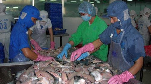 Kiến nghị giảm đầu mối xuất cá tra - 1