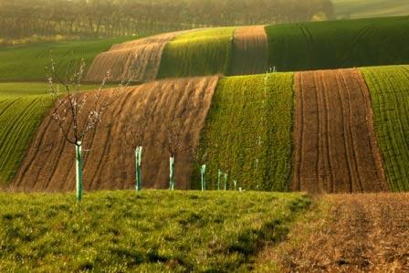 Choáng ngợp trước đồng cỏ xanh ngút ngàn ở Moravia - 1