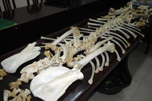 Phát hiện bộ xương trị giá gần 400 triệu ở HN - 1