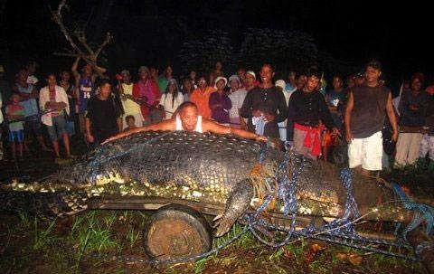 Ngắm cá sấu lớn nhất thế giới - 1