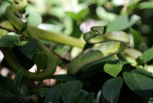 Bảo tàng rắn đầu tiên tại Việt Nam - 1