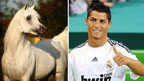 CR7 rẻ hơn ngựa của chủ tịch Malaga - 1