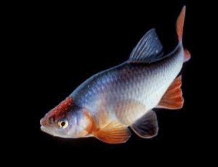 Nguy hiểm cá nhiễm hóa chất nhựa - 1