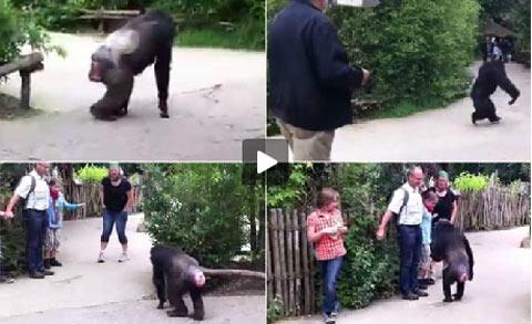 Đức: Tinh tinh sổng chuồng, sở thú náo loạn - 1