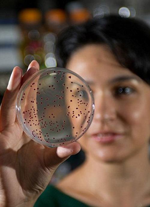 Vi khuẩn 500 triệu tuổi được mang trở lại thế gian - 1