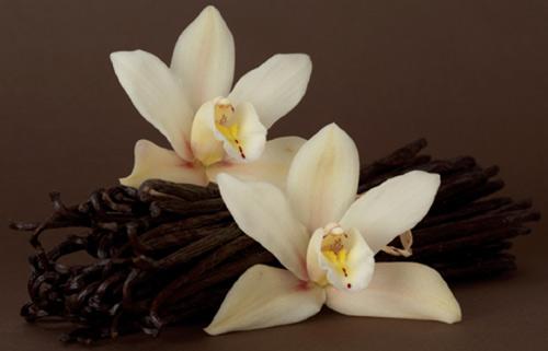 Vanilla - Gia vị đắt thứ 2 thế giới - 1