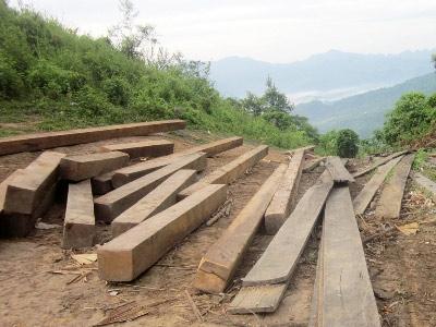 Thái Nguyên lập đoàn kiểm tra phá rừng - 1