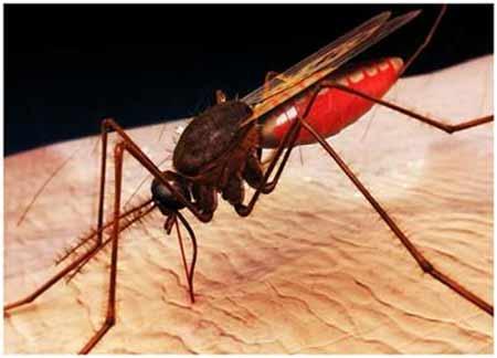 Thuốc mới ngừa ký sinh trùng sốt rét - 1