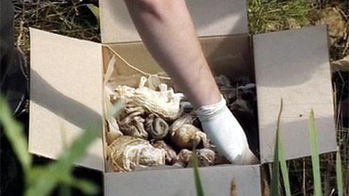 Phát hiện 248 bào thai khô trong rừng ở Nga - 1