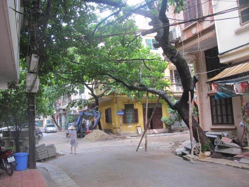 Hà Nội: Cây to đổ vào nhà dân - 1