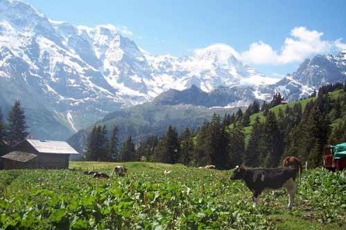 Vẻ đẹp thôn dã của ngôi làng trên núi Alps - 1