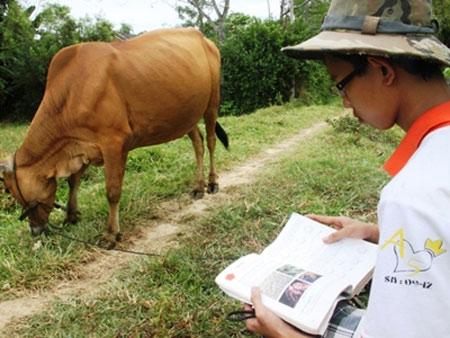 Chàng trai chăn bò đỗ thủ khoa đại học - 1
