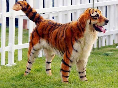 Hô biến chó cưng thành hổ, gấu - 1