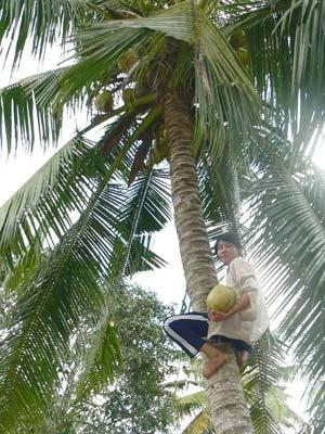 Cô gái leo dừa mướn đậu hai trường ĐH - 1