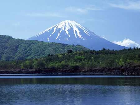 Khu rừng chết chóc ở chân núi Phú Sĩ - 1