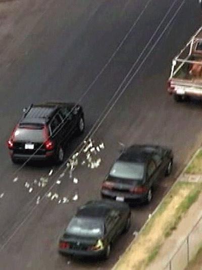 Mỹ: Ném tiền qua cửa xe để chặn cảnh sát - 1