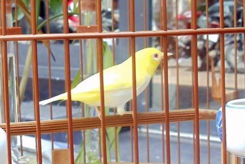 Thú chơi chim, cá tiền tỷ của đại gia Việt - 1
