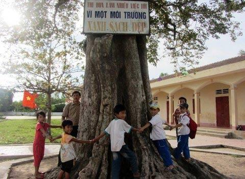 4 cây di sản kỳ lạ ở một trường học - 1