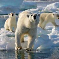 2030: 100 triệu người chết do biến đổi khí hậu