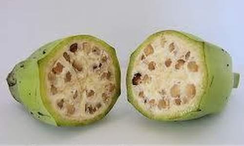 Thuốc quý từ cây chuối hột - 2