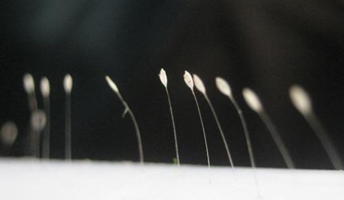 Phát hiện hoa 3.000 năm nở một lần ở Đắk Lắk? - 1