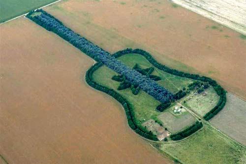 Khu rừng kì diệu hình cây đàn ghita - 1