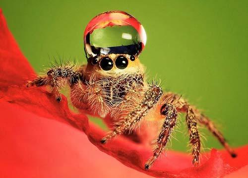 Kỳ thú nhện đội vương miện nước - 1