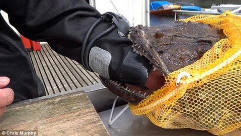 Bắt được cá khủng ở Na Uy - 1