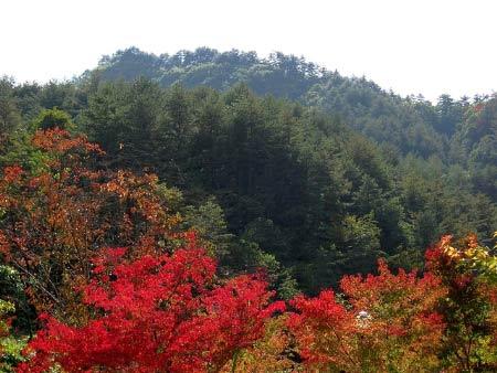 Đắm mình vào thiên sắc mùa thu xứ Hàn - 1