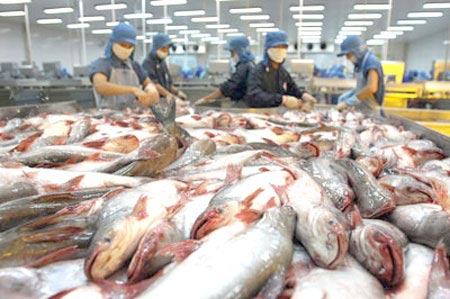 Báo động xuất khẩu cá tra nguyên con giá rẻ - 1