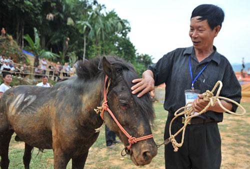 Hà Giang: Uy mãnh 32 chú ngựa tung vó vào trận thư hùng - 1