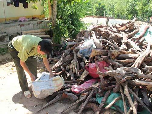 Phát sốt vì gỗ trắc - 1