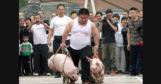 Tháng 10/2012, tại thành phố Hành Dương, tỉnh Hồ Nam (Trung Quốc) đã diễn ra một cuộc thi mang tên Thử thách Hercule. Mỗi người chơi phải xách hai con lợn chạy thi.