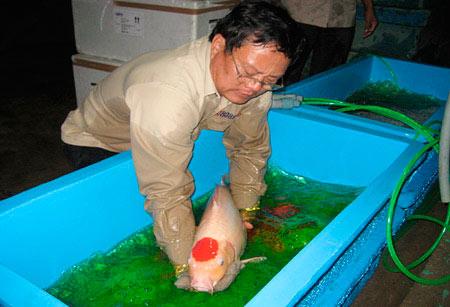 Rộng đường xuất khẩu cá cảnh - 1