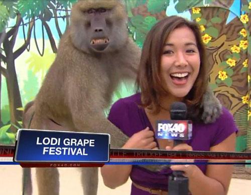 """Video khỉ """"sàm sỡ"""" nữ phóng viên xinh đẹp - 1"""