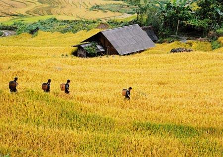 Về Miền Tay Bắc Bồng Bềnh Sương Khoi