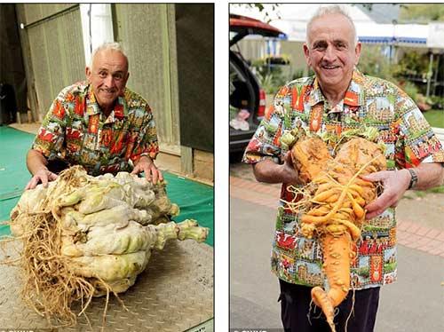 """Củ cải """"quái vật"""" nặng 54 kg - 1"""