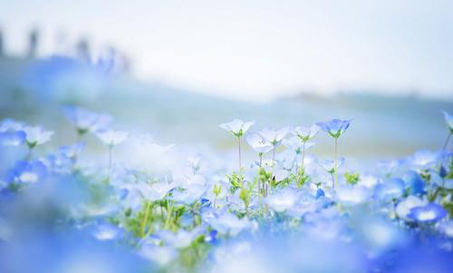 Vuon Hoa Mau Xanh Ghé Thăm Vườn Hoa Màu Xanh ở Nhật Bản