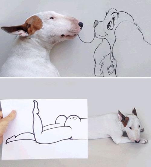 Cảm động với chùm ảnh những chú chó đặc biệt - 1