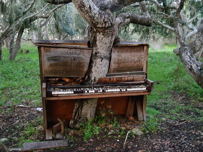 Cây mọc xuyên qua chiếc đàn piano cũ ở Carlifonia, Mỹ