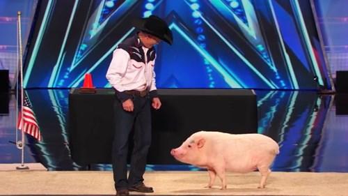 Video: Màn trình diễn ấn tượng của chú lợn thông minh - 1