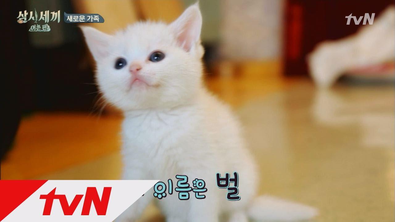 Cặp đôi chó, mèo dễ thương gây \u201cbão\u201d truyền hình Hàn - 5