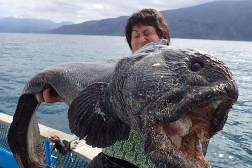 Bắt được quái ngư gần vùng nhiễm xạ Fukushima - 1