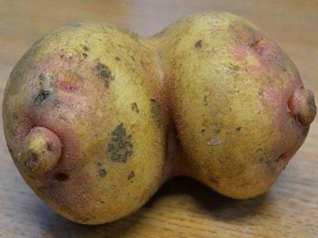 Hôm qua đào được củ khoai, lạ kỳ nó lại như 2 CÁI GÌ?