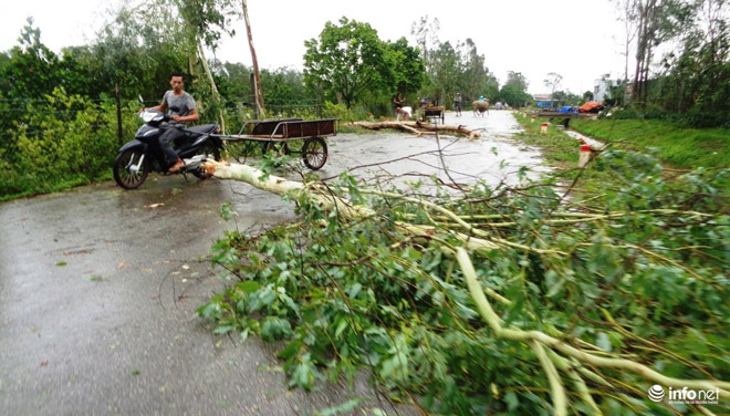 Tháng 8, Việt Nam phải hứng chịu bao nhiêu cơn bão? - 1